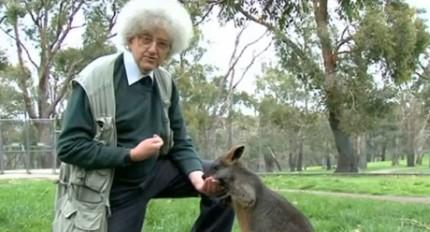 Professor martyn alimenta um canguru