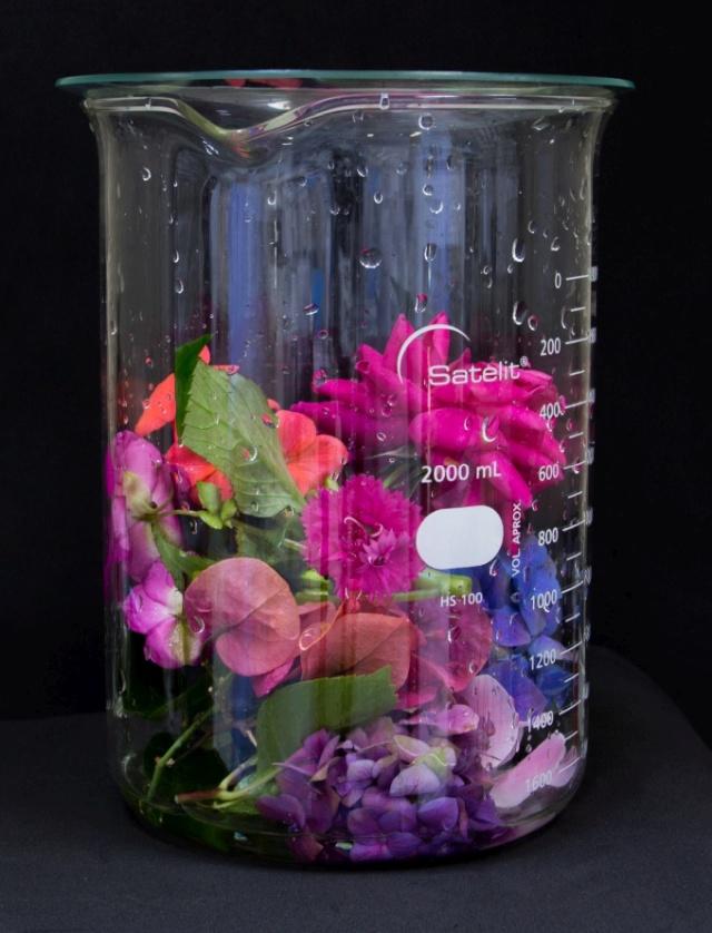 frasco de vidro grande com várias flores cortadas