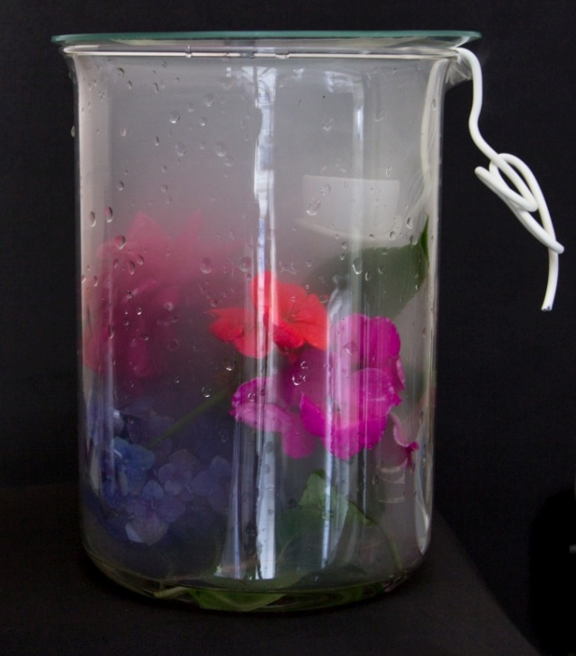 frasco de vidro tampado com flores expostas aos gases