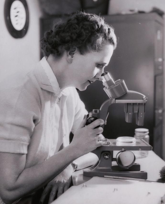Rachel Carson usando um microscópio