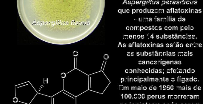 informações sobre as aflatoxinas
