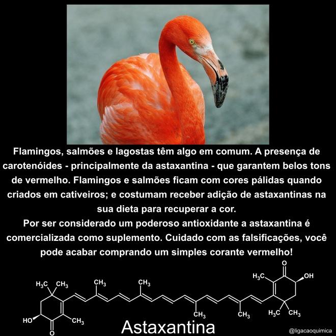 astaxantinas em flamingos e salmões